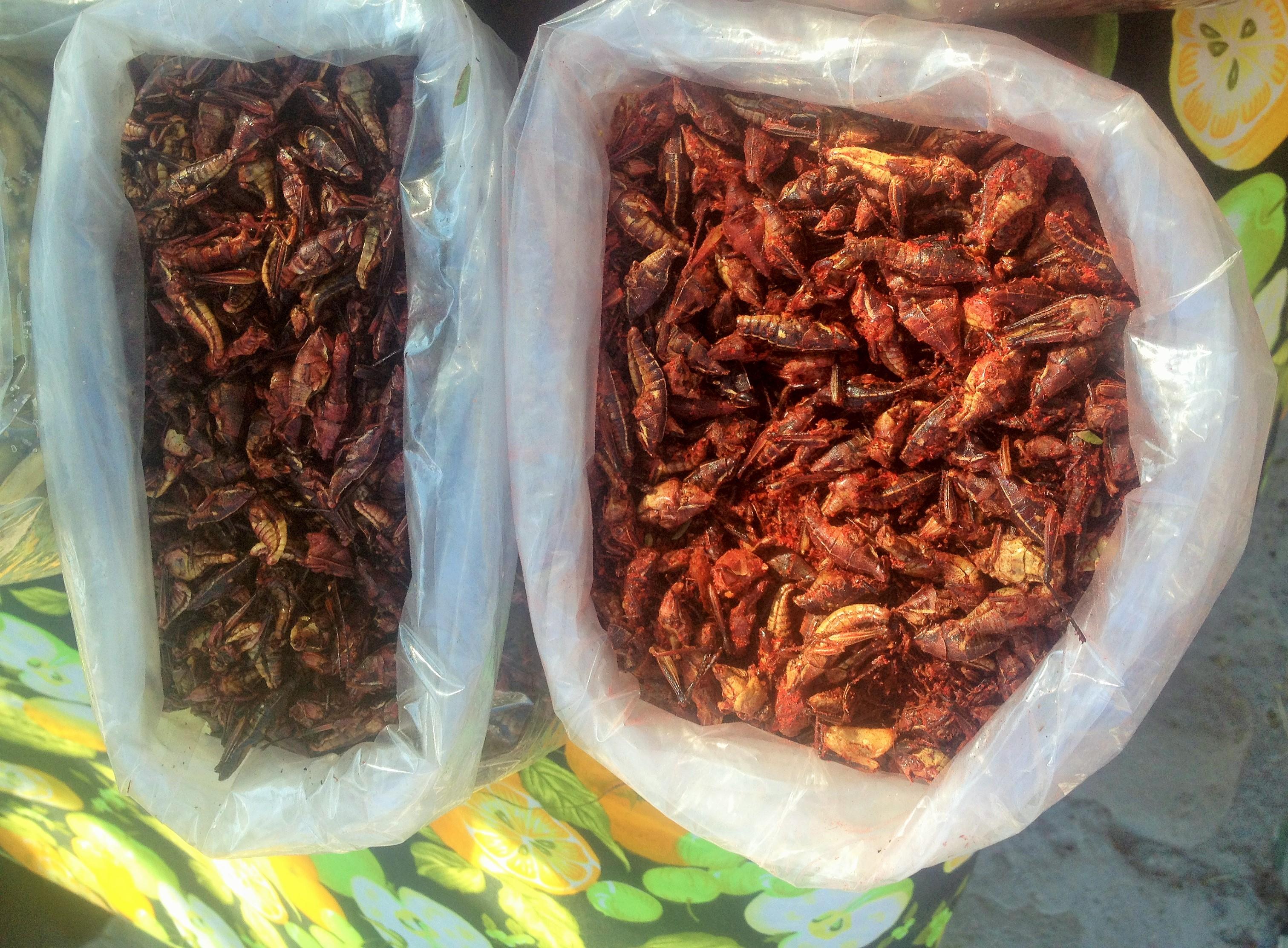 Chapulines em Cholula - Puebla - México