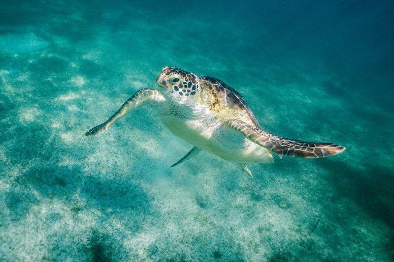 Nadar com tartarugas na praia de Akumal - México