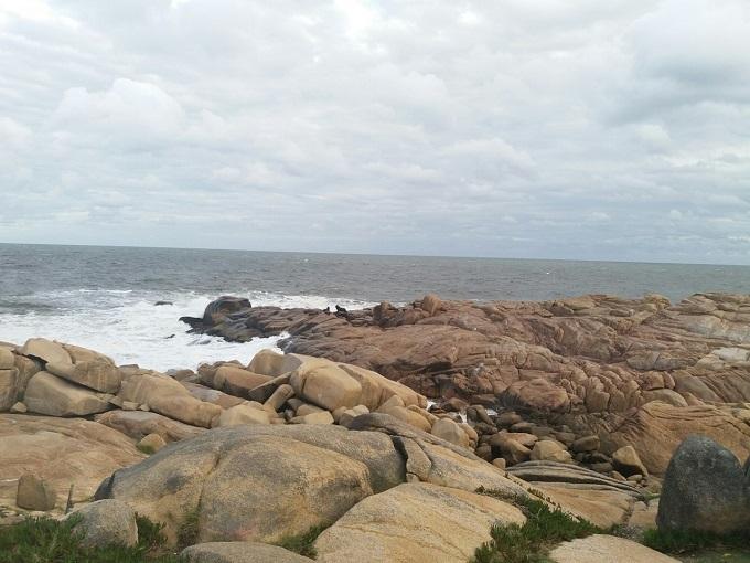 Lobos marinhos em Cabo Polonio - Uruguai