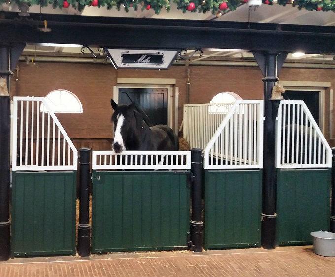 Cavalos da Heineken Amsterdã
