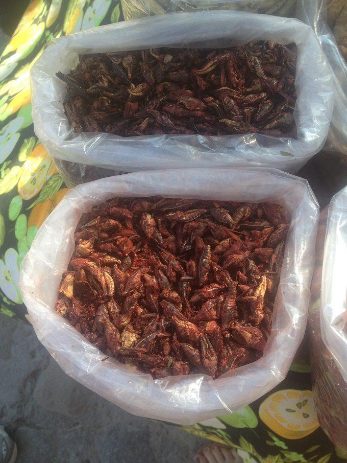 Chapulines: gafanhotos que se comem no México