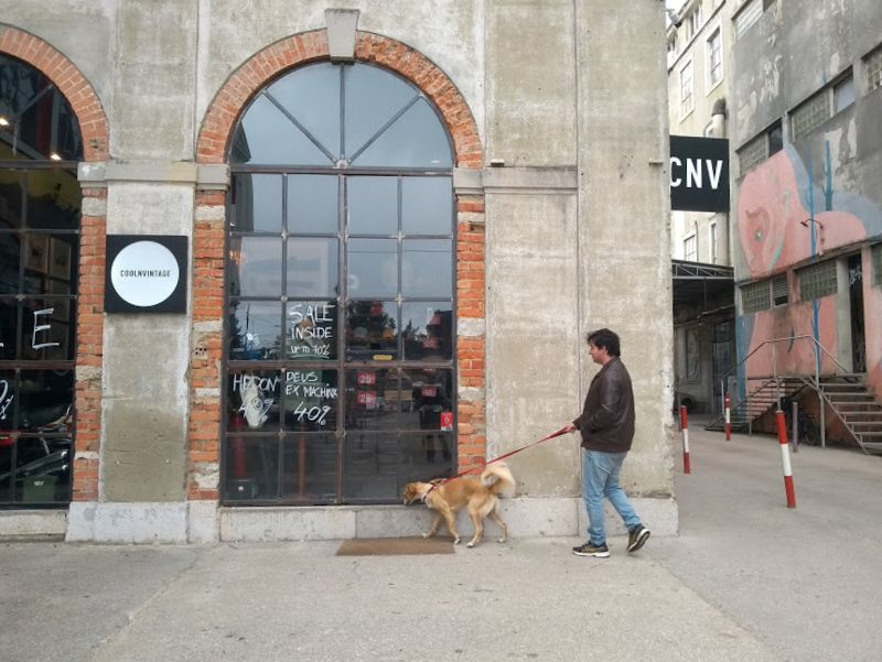 Como viajar com cachorro para Portugal