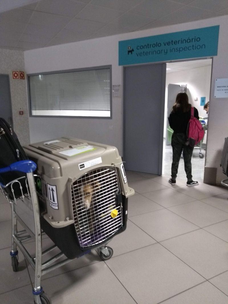 Quanto custa levar meu cachorro para Europa