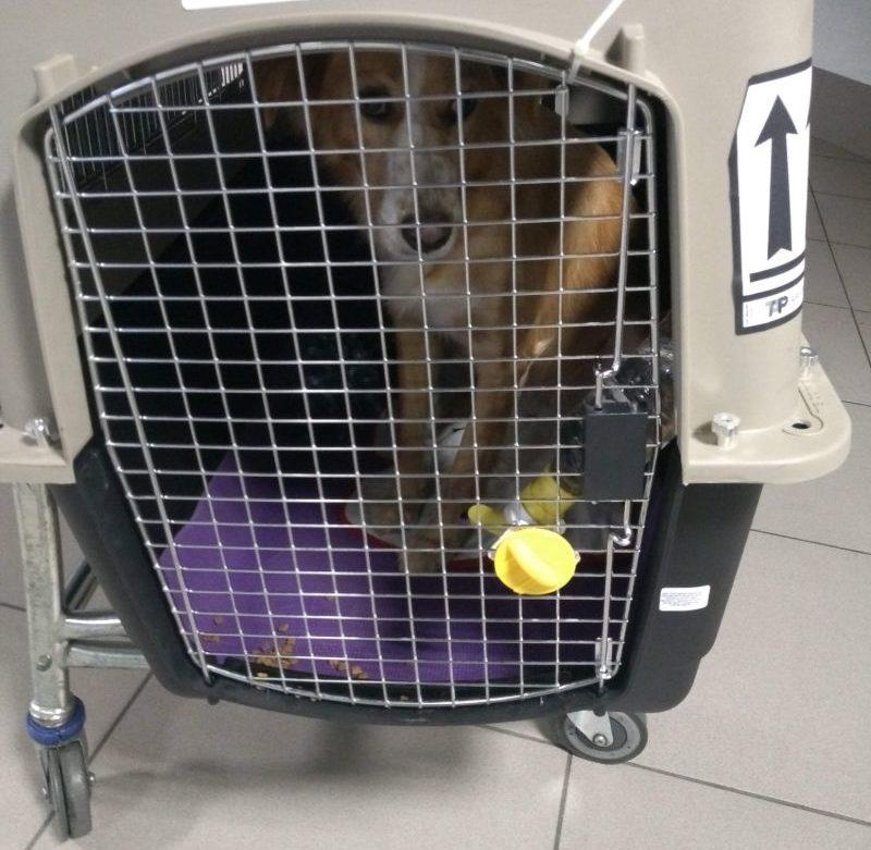 Caixa de transporte para viagem de avião com animais
