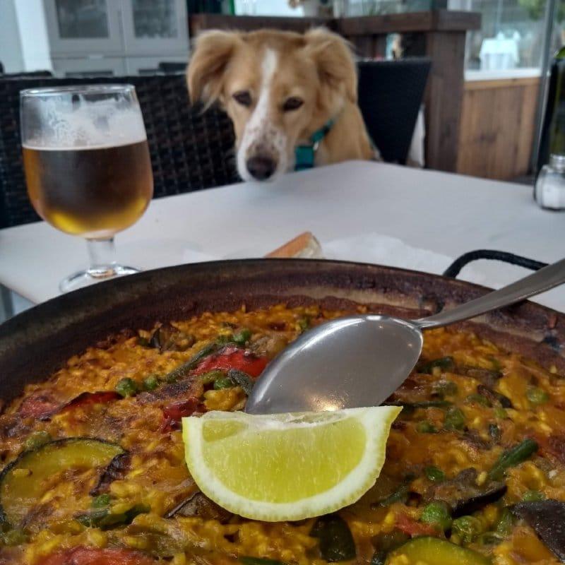 Em primeiro plano, a foto de uma paella vegetariana, ao fundo, é possível ver um cachorro com cara de pidão.