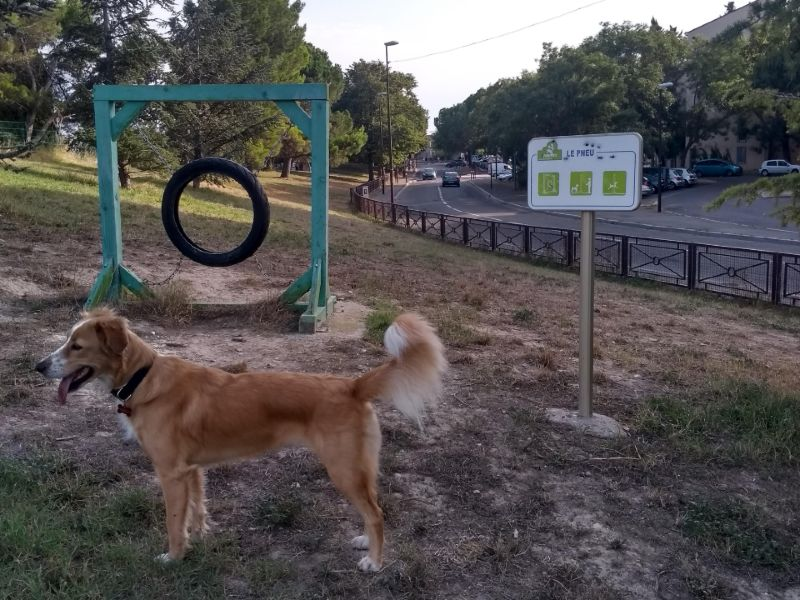 França com cachorro: Mia se divertindo no Parque Chico Mendes, em Avignon