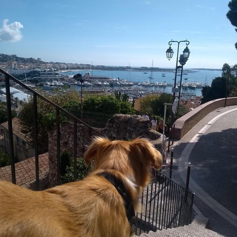 Onde ficar em Cannes: cachorro vira-lata observa Cannes do alto de Le Suquet