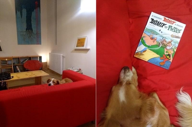 Cachorro deitado no sofá de uma casa alugada pelo Airbnb