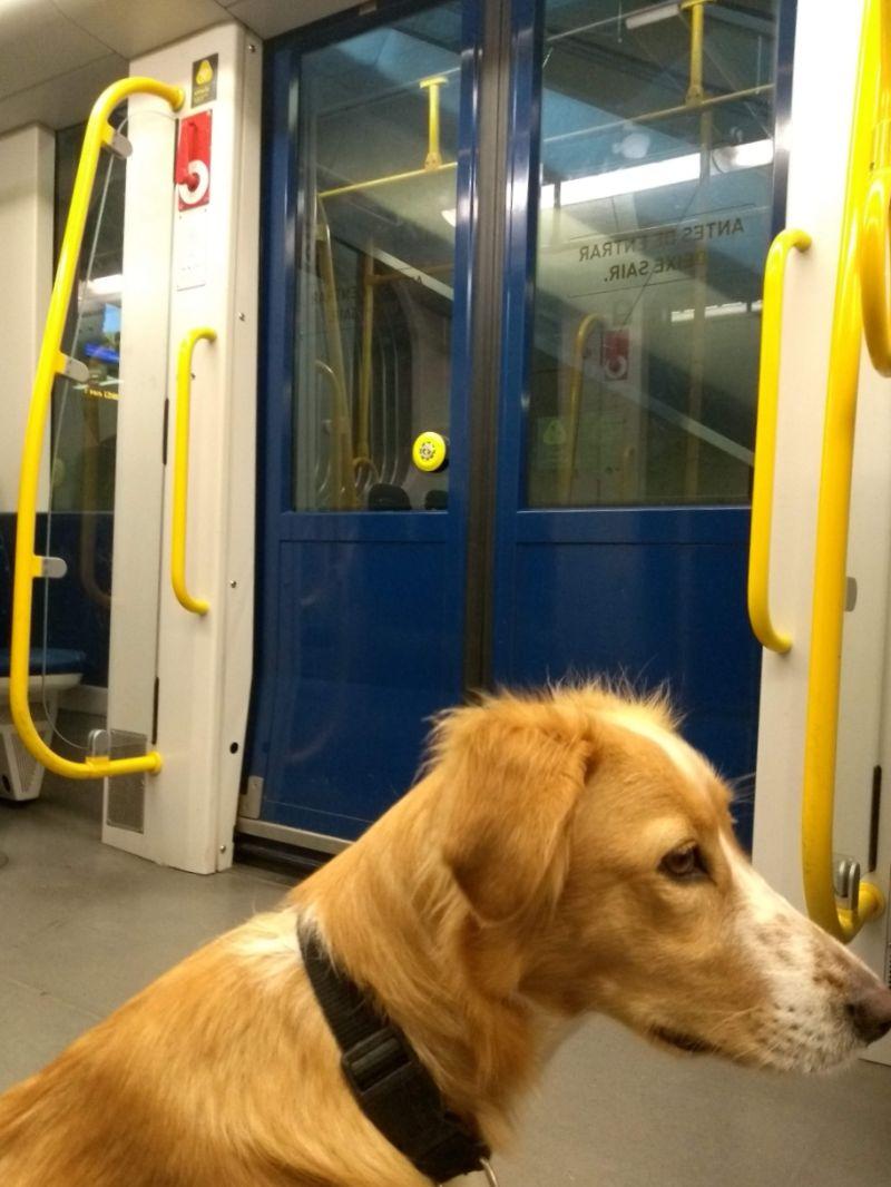 Porto pet friendly: cachorro andando no metrô do Porto