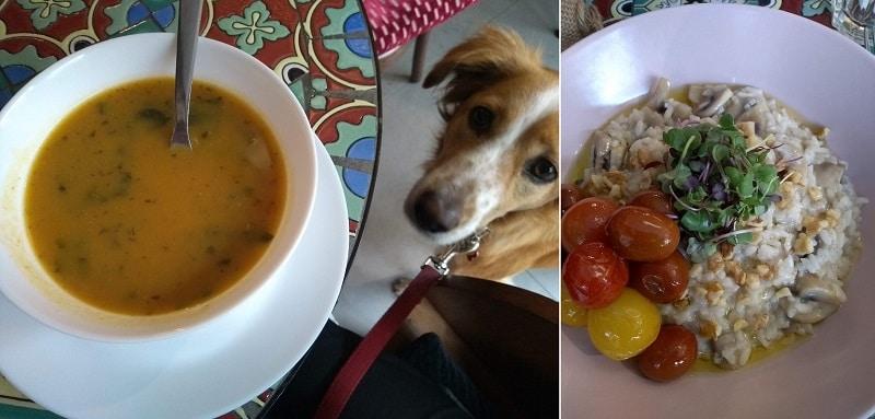 Na foto da esquerda, uma sopa aparece em primeiro plano sendo olhada por um cachorro; na foto da direita, close em um risoto de cogumelos