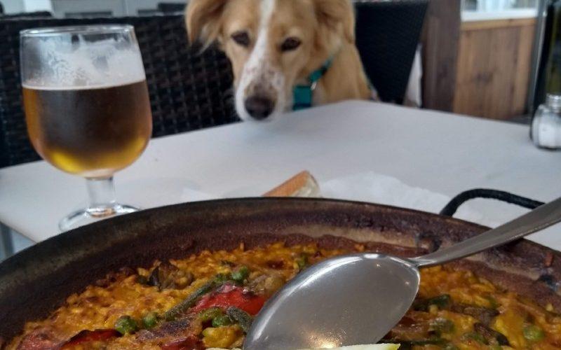 Cachorro olhando para um prato de paella na espanha